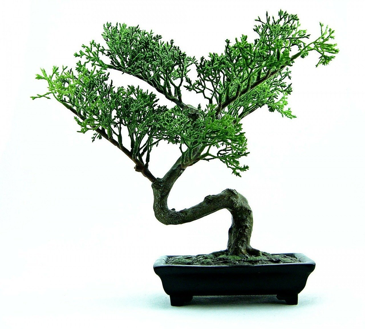 You are currently viewing Oozing Bonsai