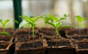 Read more about the article Gardening Tips for Plants